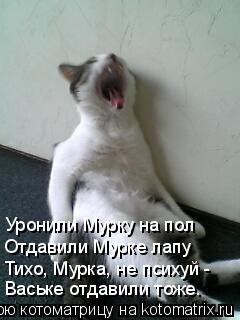 Котоматрица: Уронили Мурку на пол Отдавили Мурке лапу Тихо, Мурка, не психуй -  Ваське отдавили тоже.