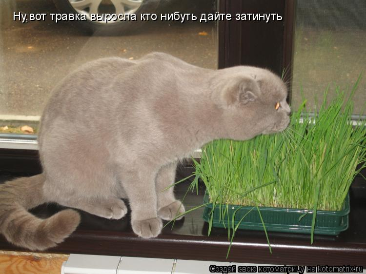 Котоматрица: Ну,вот травка выросла кто нибуть дайте затинуть
