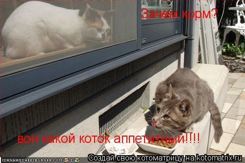 Котоматрица: Зачем корм?  вон какой коток аппетитный!!!!