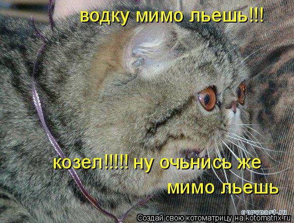 Котоматрица: водку мимо льешь!!! козел!!!!! ну очьнись же  мимо льешь