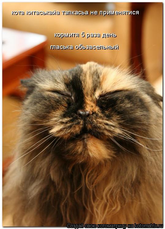 Котоматрица: кормитя 5 раза день кормитя 5 раза день кота китаськайа тапкасьа не применятися гласька обьзасельный