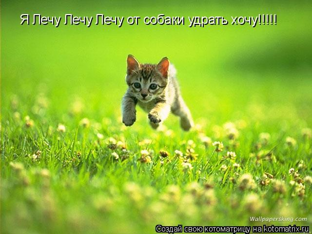 Котоматрица: Я Лечу Лечу Лечу от собаки удрать хочу!!!!!