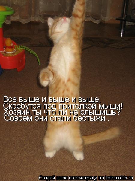Котоматрица: Всё выше и выше и выше, Скребутся под притолкой мыши! Хозяин,ты что ли не слышишь? Совсем они стали бестыжи..