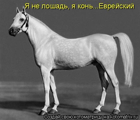 Котоматрица: Я не лошадь, я конь...Еврейский
