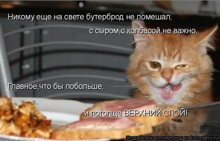 Котоматрица: Никому еще на свете бутерброд не помешал, с сыром,с колбасой,не важно, Главное,что бы побольше,  и потолще ВЕРХНИЙ СЛОЙ!