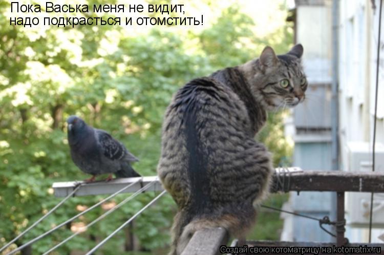 Котоматрица: Пока Васька меня не видит,  надо подкрасться и отомстить!
