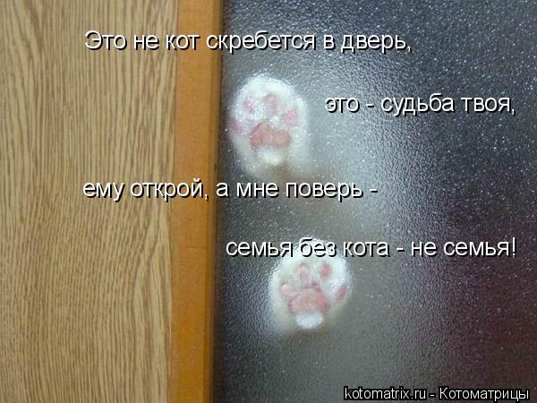 Котоматрица: Это не кот скребется в дверь, это - судьба твоя, ему открой, а мне поверь - семья без кота - не семья!