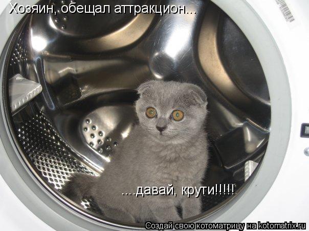 Котоматрица: Хозяин, обещал аттракцион... ....давай, крути!!!!!