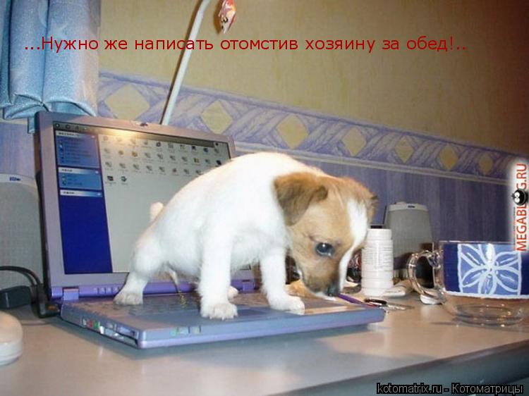 Котоматрица: ...Нужно же написать отомстив хозяину за обед!..