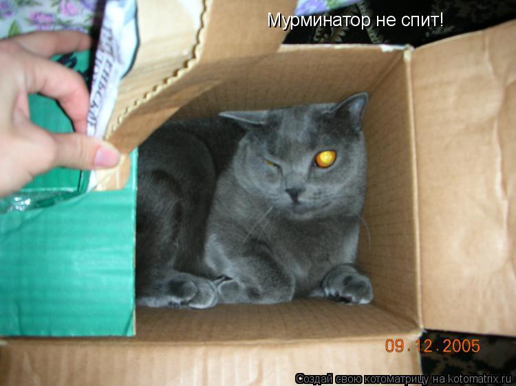 Котоматрица: Мурминатор не спит!