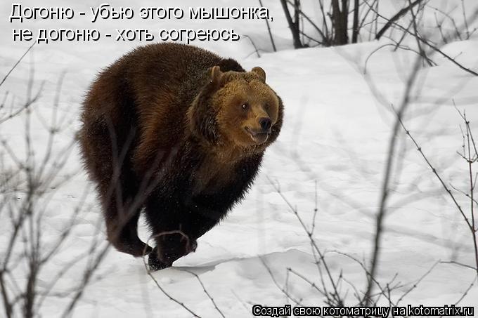 Котоматрица: Догоню - убью этого мышонка,  не догоню - хоть согреюсь