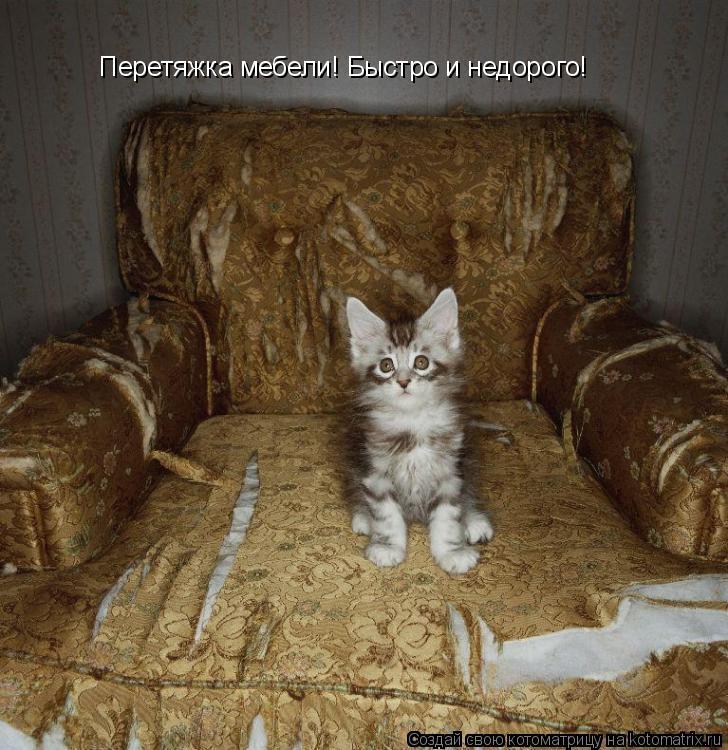 Котоматрица: Перетяжка мебели! Быстро и недорого!