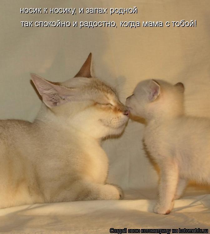 Котоматрица: носик к носику, и запах родной так спокойно и радостно, когда мама с тобой!