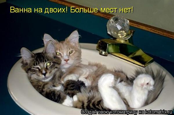 Котоматрица: Ванна на двоих! Больше мест нет!
