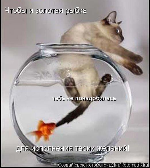 Котоматрица: Чтобы и золотая рыбка  тебе не понадобилась для исполнения твоих желаний!