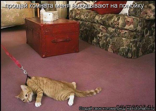Котоматрица: прощай комната меня выкидывают на помойку
