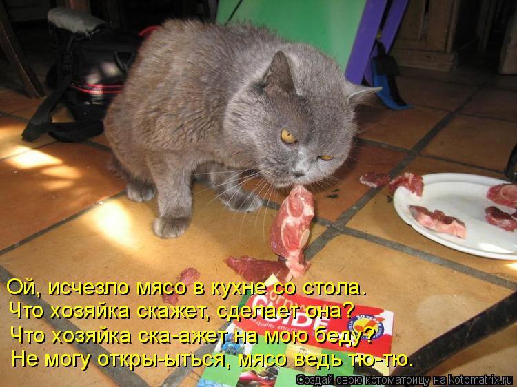 Котоматрица: Ой, исчезло мясо в кухне со стола. Что хозяйка скажет, сделает она? Что хозяйка ска-ажет на мою беду? Не могу откры-ыться, мясо ведь тю-тю.