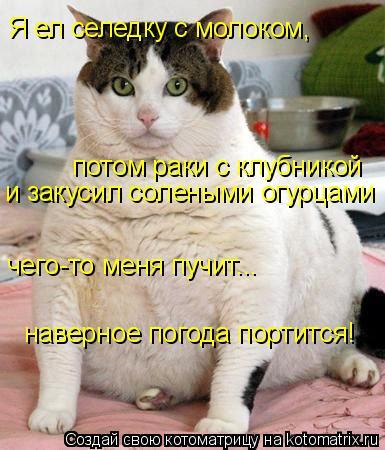 Котоматрица: Я ел селедку с молоком, потом раки с клубникой и закусил солеными огурцами чего-то меня пучит... наверное погода портится!