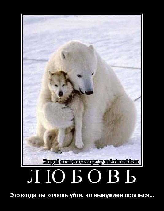 Котоматрица: Любовь Это когда ты хочешь уйти, но вынужден остаться...