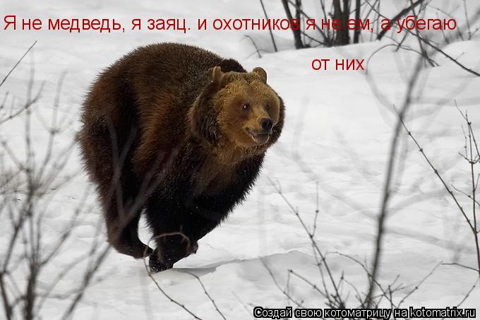 Котоматрица: Я не медведь, я заяц. и охотников я не ем, а убегаю от них