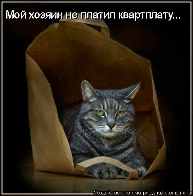 Котоматрица: Мой хозяин не платил квартплату... Мой хозяин не платил квартплату...