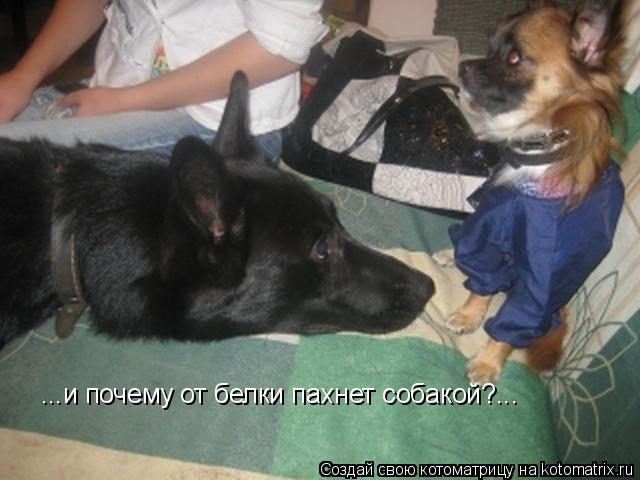 Котоматрица: ...и почему от белки пахнет собакой?...