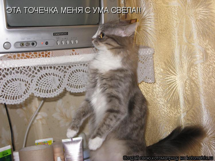 Котоматрица: ЭТА ТОЧЕЧКА МЕНЯ С УМА СВЕЛА!!