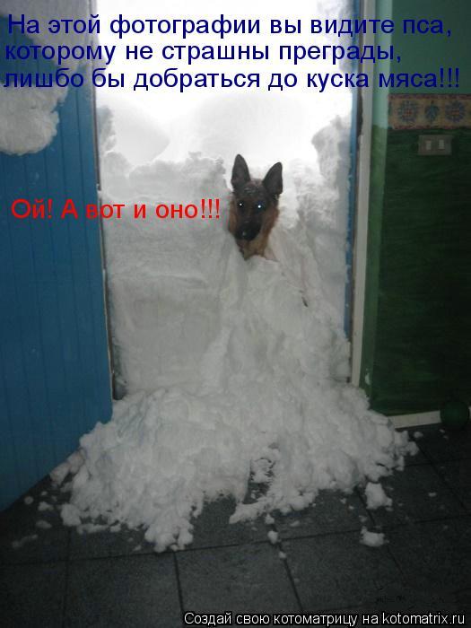 Котоматрица: На этой фотографии вы видите пса, которому не страшны преграды, лишбо бы добраться до куска мяса!!! Ой! А вот и оно!!!