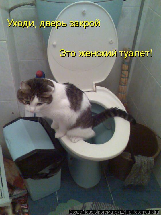 Котоматрица: Уходи, дверь закрой Это женский туалет!