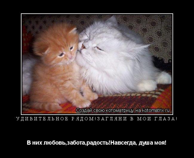 Котоматрица: Удивительное рядом!Загляни в мои глаза! В них любовь,забота,радость!Навсегда, душа моя!