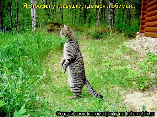 Котоматрица: Я спросил у травушки, где моя любимая...