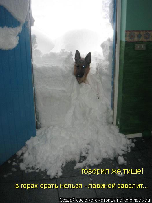 Котоматрица: говорил же,тише! в горах орать нельзя - лавиной завалит...