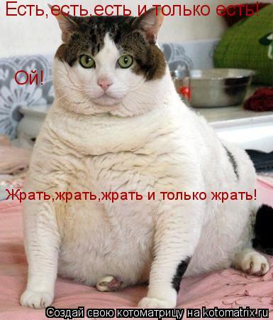 Котоматрица: Есть,есть,есть и только есть! Ой! Жрать,жрать,жрать и только жрать!