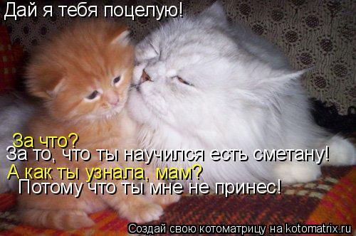 Котоматрица: Дай я тебя поцелую! За что? За то, что ты научился есть сметану! А как ты узнала, мам? Потому что ты мне не принес!