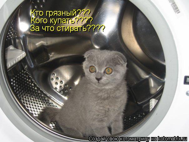 Котоматрица: Кто грязный??? Кого купать???? За что стирать????