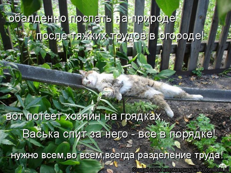 Котоматрица: обалденно поспать на природе  после тяжких трудов в огороде! вот потеет хозяин на грядках, Васька спит за него - все в порядке! нужно всем,во