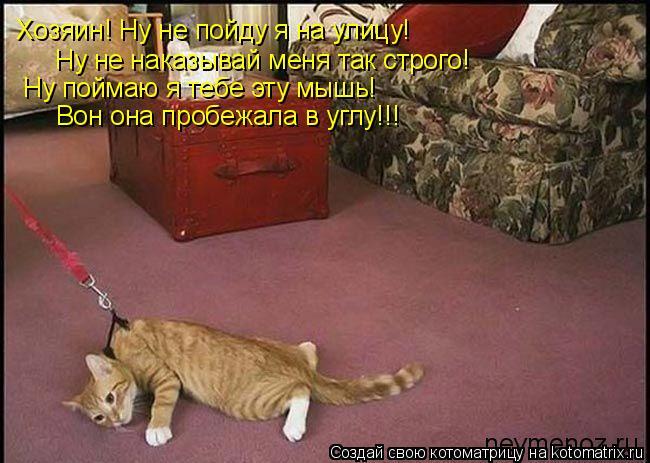 Котоматрица: Хозяин! Ну не пойду я на улицу!  Ну не наказывай меня так строго!  Ну поймаю я тебе эту мышь! Вон она пробежала в углу!!!