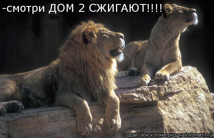 Котоматрица: -смотри ДОМ 2 СЖИГАЮТ!!!!