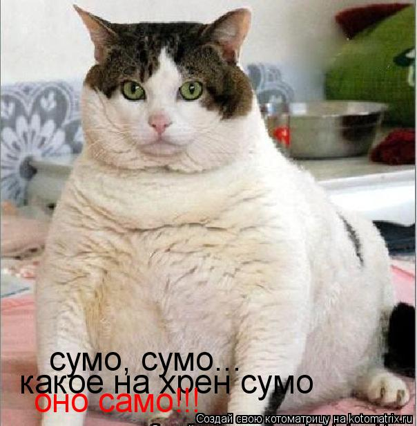 Котоматрица: сумо, сумо... какое на хрен сумо оно само!!!