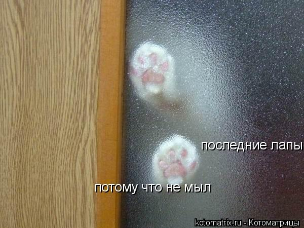 Котоматрица: последние лапы потому что не мыл