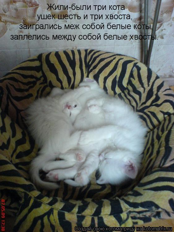 Котоматрица: Жили-были три кота ушек шесть и три хвоста, заигрались меж собой белые коты, заплелись между собой белые хвосты.