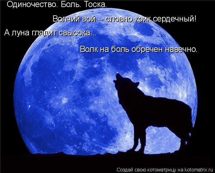 Котоматрица: Одиночество. Боль. Тоска. Волчий вой -- словно крик сердечный! А луна глядит свысока... Волк на боль обречен навечно.