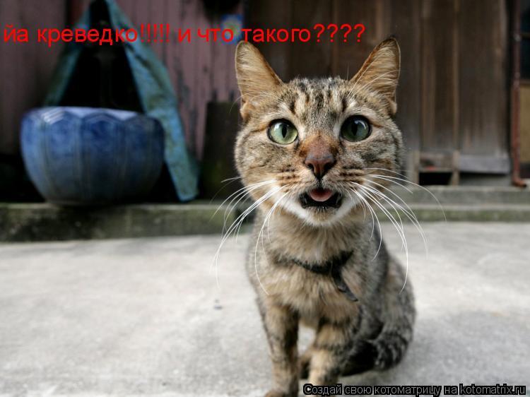 Котоматрица: йа креведко!!!!! и что такого????