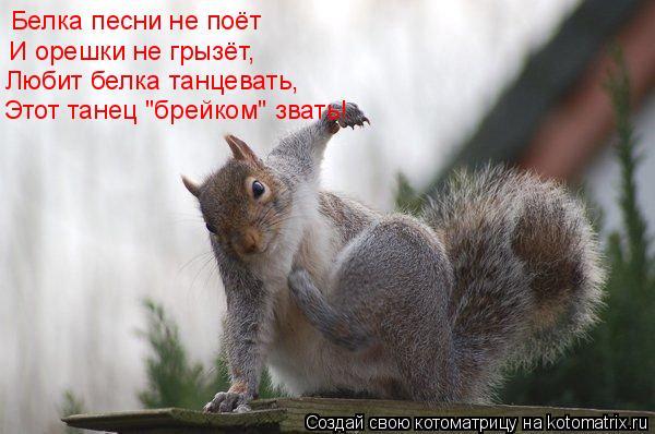 """Котоматрица: Белка песни не поёт И орешки не грызёт, Любит белка танцевать, Этот танец """"брейком"""" звать!"""