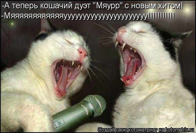 "Котоматрица: -А теперь кошачий дуэт ""Мяурр"" с новым хитом! -Мяяяяяяяяяяяяуууууууууууууууууууууу!!!!!!!!!!!"