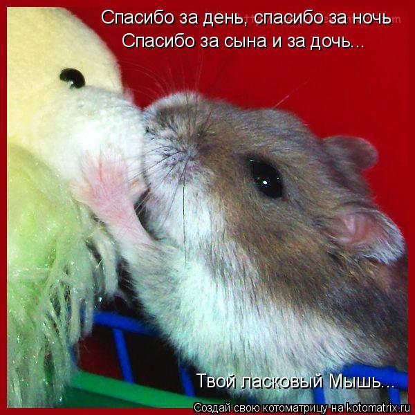 Котоматрица: Спасибо за день, спасибо за ночь Спасибо за сына и за дочь... Твой ласковый Мышь...