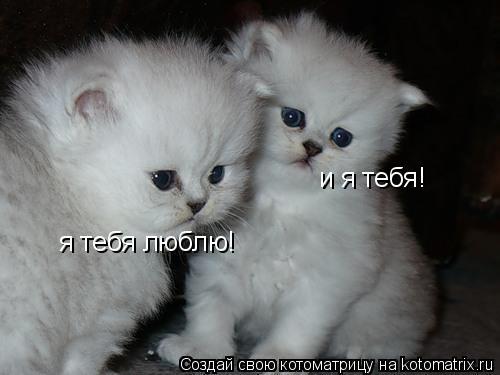 Котоматрица: я тебя люблю! и я тебя!