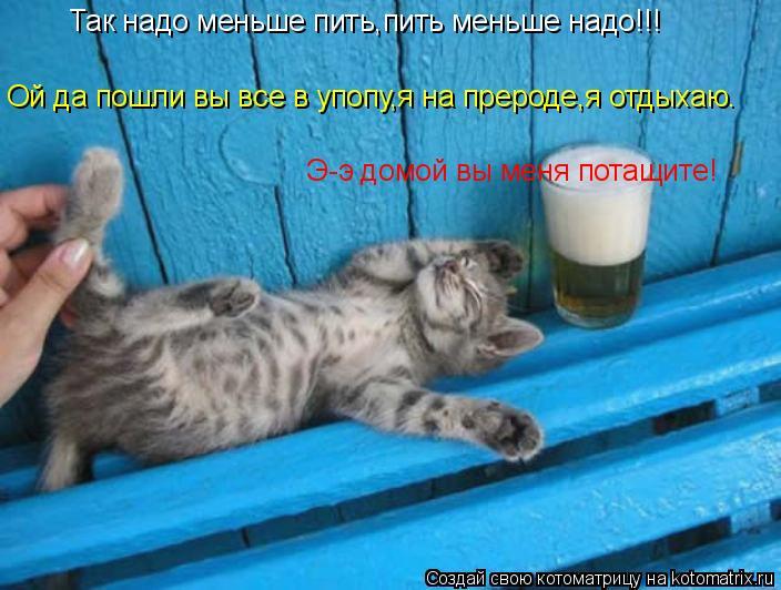 Котоматрица: Так надо меньше пить,пить меньше надо!!! Ой да пошли вы все в упопу,я на прероде,я отдыхаю. Э-э домой вы меня потащите!