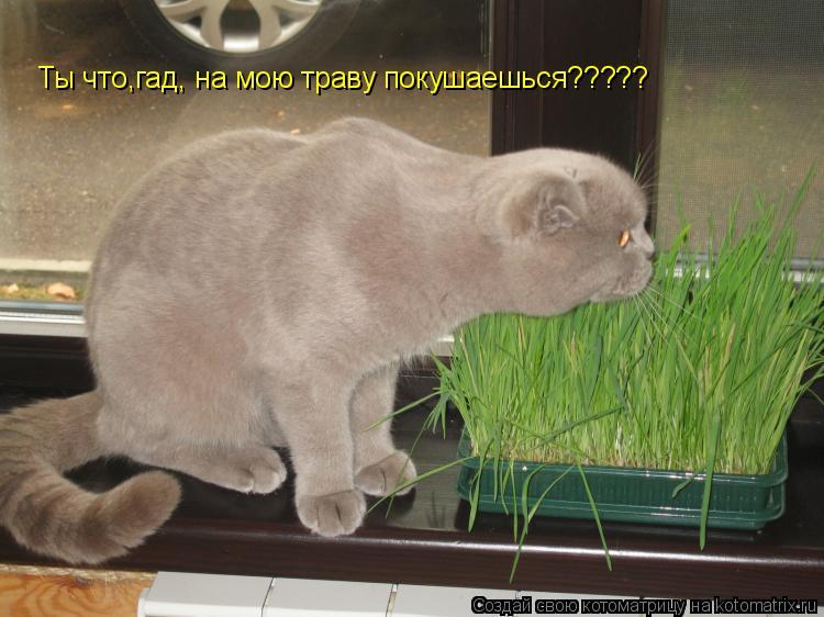 Котоматрица: Ты что,гад, на мою траву покушаешься?????