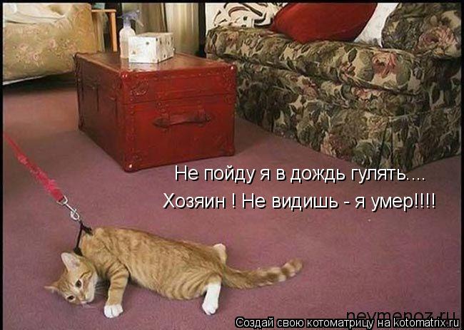 Котоматрица: Не пойду я в дождь гулять.... Хозяин ! Не видишь - я умер!!!!